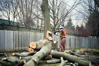 Tree Removal. Trimming. Chipping. Stump Removal.