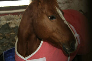 Many Horses For Sale