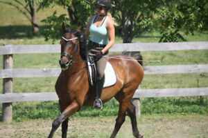 2 horses available for part board