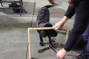 Obedience Classes at Pet-D-Gree