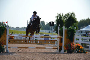 Experienced 23-year-old rider looking for a horse to exercise