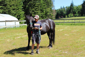 Canadian cross horse for sale
