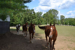Horse Farm -Gorgeous Country 36 Acre Equestrian Facility