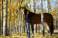 Stable Hand - Full Time & Part Time