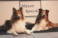 Boarding Dogs, Cats, Birds, Rabbits, Turtle at... MANOIR KANISHA