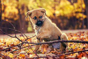 HollyBerry Photography, Dog & Pet Sessions