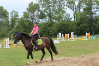 2 Summer Working studen position on horse farm 14yrs+