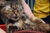 LUMPY: Rescue Cat In Need Of Good Home
