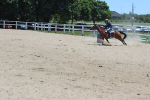 Gorgeous QH Mare for Part Board at Trigaire