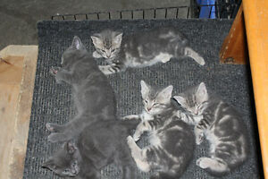 5 wonderful kittens free to good homes