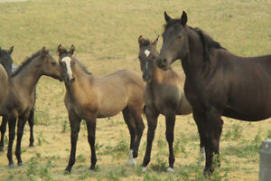 AQHA Prospects Priced to sell