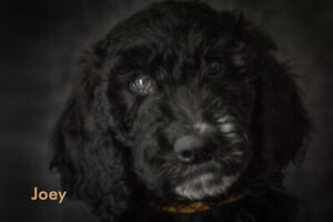 Adopt Dogs & Puppies Locally in Cowichan Valley / Duncan | Pets
