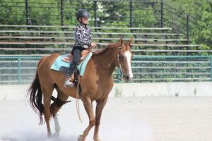 Wanted Co-boarder - Horse Cambridge Kitchener Area image 3