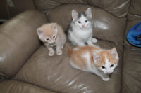 bradford, kittens looking for home