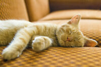 Kitty Cat Lodge