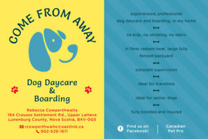 Come From Away Dog Daycare and Boarding