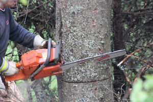 Tree Removal / Arborist Services