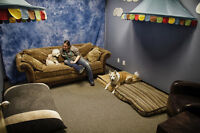 Our quiet section at Back in the Pack dog daycare NW