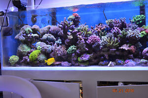 Saltwater Tank and all accessories and big fishes