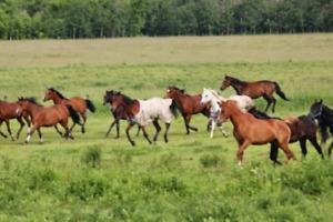Pony Rides Car Wash BBQ FUNDRAISER