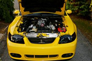 2004 Ford Mustang SVT Cobra #0251