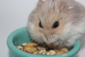 $1.00 a Day Small Animal Pet Sitting! London Ontario image 9