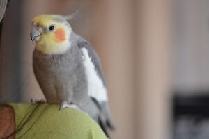 Barrie pet boarding / pet-sitting for birds and small pets