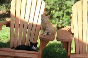 Friendly Tame Farm Kittens