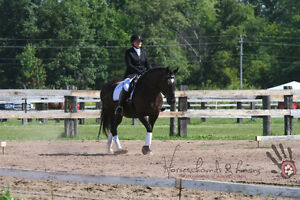 Beautiful mare available for lease Windsor Region Ontario image 2