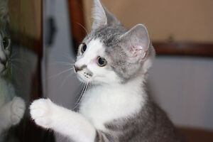 Kittens for adoption - Keeping Cats Homed