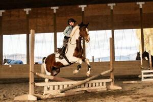 Beautiful Paint mare!