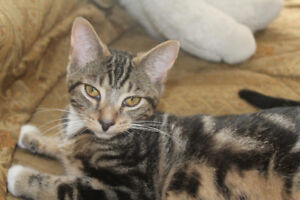 best friend's Blake and O'Henry available for adoption