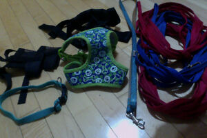 Various leashes, muzzles and harnesses Kingston Kingston Area image 1