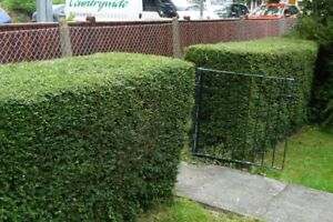 Quality Lawn Cutting - Sidewalk Edging - Hedge Trimming Service