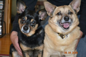 Niagara dog rescue is needs a home for a boned pair