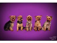 Pet Portrait Session (half price!)