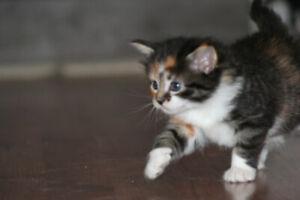 Petit chaton à donner