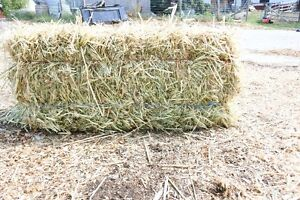 Oat Green Feed Square Bales (Straw)