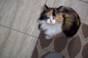 Calico cat Secord Woods