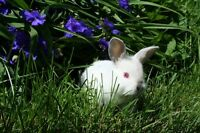 Baby Bunnies from Bashful for Sale