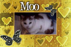 Mr. Moo is wating for you and a forever home. Carma Moncton.
