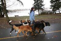Dog trainer and walker!