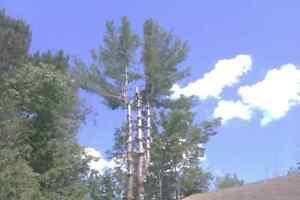 Fully Insured Tree Removal Kingston Kingston Area image 3