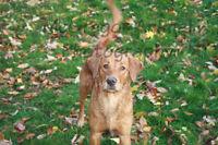 FREE dog photography session!