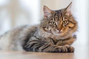 Gardiennage d'animaux pet sitting à Montréal chat chien rongeur