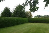 SPRING HEDGE TRIMMING SERVICES- AFFORDABLE RATES!