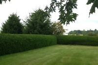 WINTER HEDGE TRIMMING SERVICES- AFFORDABLE RATES!