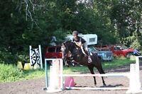 riding lessons and day camps holliday special