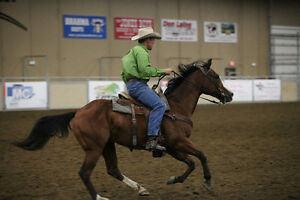 Beautiful All Around Bay working cow horse