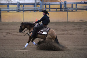 Lachlan Bell Performance Horses